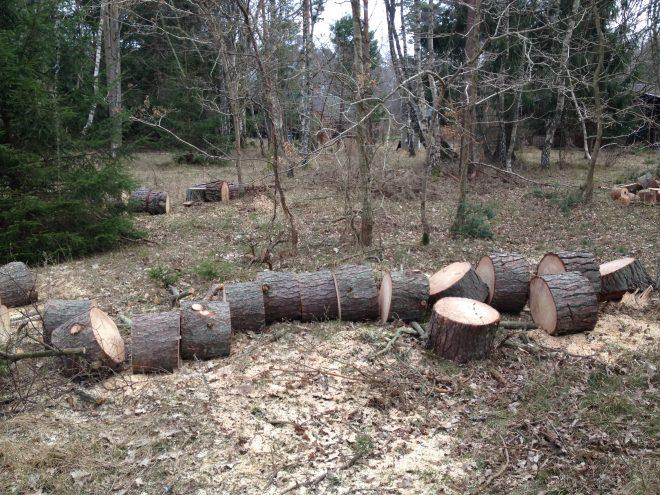 Opskæring af træ til brænde